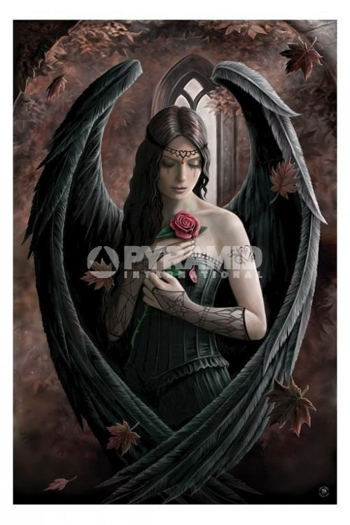 plagát Anne Stokes (Angel Rose) - PP32093 - PYRAMID Posters